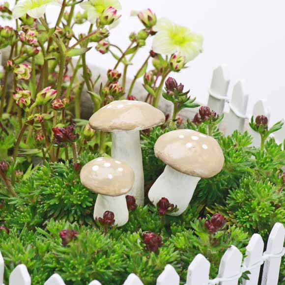 Woodland Flat Topped Toadstool