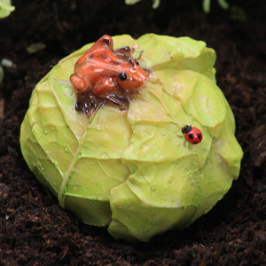 Cabbage Patch & Frog - Fairy Garden Accessory