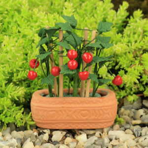 Tomato Plant & Pot