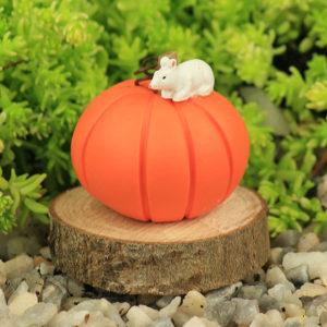 Pumpkin & Mouse