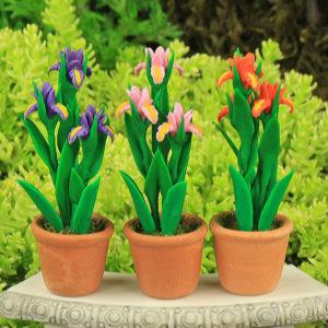 Iris Flower & Pot
