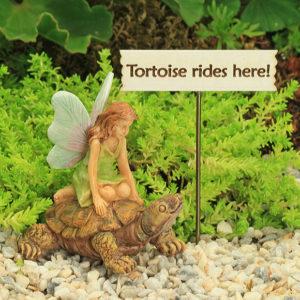 Tortoise Rides