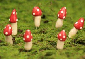 Teeny Tiny Fairy Ring Mushrooms