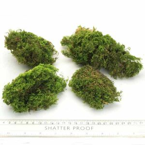 Natural Preserved Moss Rounds