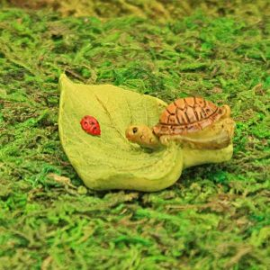 Leaf and Tortoise