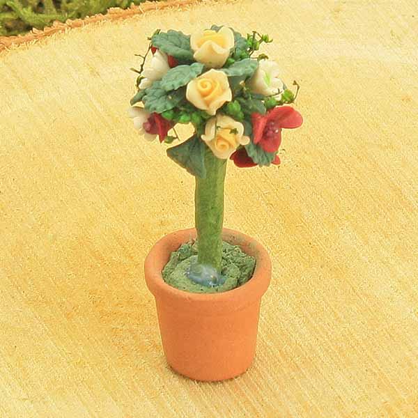 Standard Rose Bush