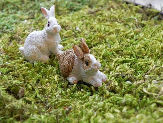 White/Tan Rabbits